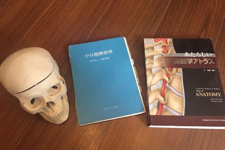 医療用イラスト=解剖を知るためにあると便利なもの。解剖学アトラス、模型、無料ソフト