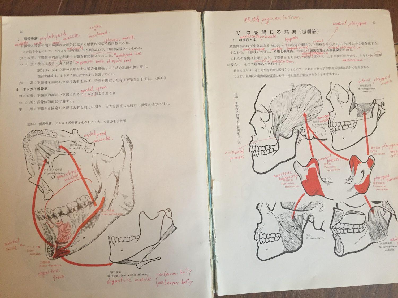 小口腔解剖学 上條雍彦著 アナトーム社