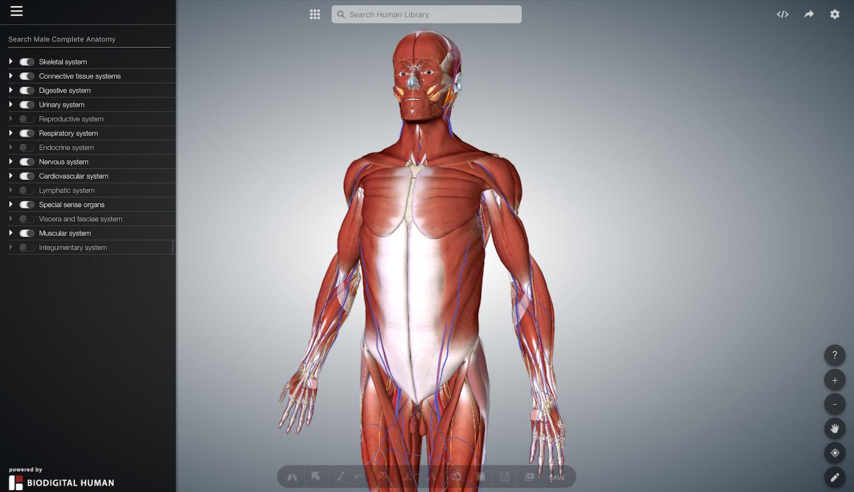 bio digital human