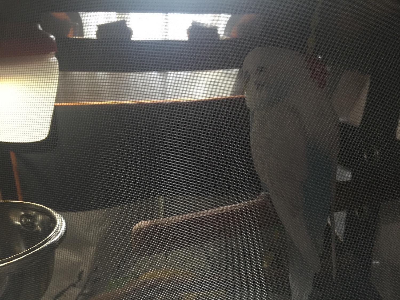 pak o bird