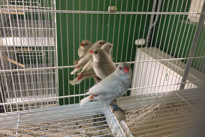 オランダ・アイントホーヘンの鳥専門店・Birdshop Eindhoven