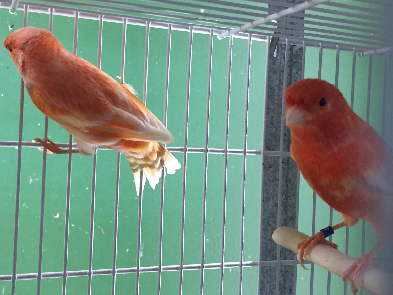 Birdshop Eindhoven