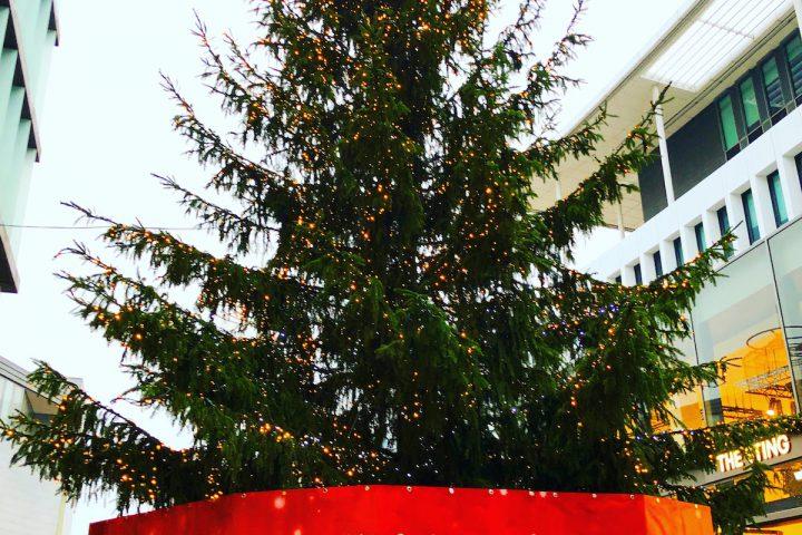 オランダにはクリスマスツリー用のゴミ出し日がある!ウソか本当か!?